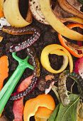 stock photo of household farm  - kitchen scraps  in compost soil  pile  surface  - JPG