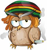 Jamaican Owl Cartoon On White Background