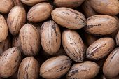 stock photo of pecan tree  - Close up on pecan nuts in shells - JPG