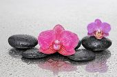 image of wet  - Red and pink orchid and wet black stones on wet - JPG