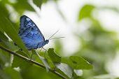 foto of blue butterfly  - Blue - JPG