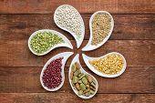 picture of teardrop  - variety of beans - JPG