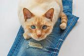 foto of blue eyes  - light ginger blue - JPG