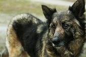 picture of mongrel dog  - Mongrel dog outdoors - JPG