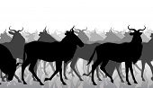 picture of wildebeest  - Cutout illustration of a herd of adult wildebeest - JPG
