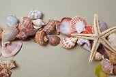 pic of scallop shell  - nice shells - JPG