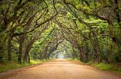 image of backwoods  - Botany Bay Plantation Spooky Dirt Road Creepy Marsh Oak Trees Tunnel with spanish moss on Edisto Island SC - JPG