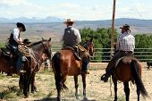 stock photo of brahma-bull  - hard working cowboys looking off in the valley for a plan - JPG