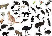 picture of platypus  - illustration with set of australian animals and birds isolated on white background - JPG