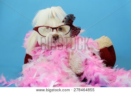poster of Dog Photo Shoot. Beautiful Maltese Dog with a Pink and White feather boa in a dog bed with a blue se