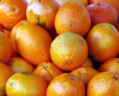 pic of valencia-orange  - Valencia Oranges at an outdoor market