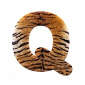Tiger letter Q - large 3d Feline fur font isolated on white background. This alphabet is perfect for poster