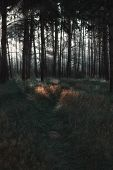 Sunrays Shining On The Path Through The Trees In The Dark Pine Forest - Atmospheric Natural Landscap poster