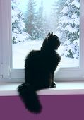 Black Cat Looking Out Window Behind Which Snowy Winter. Curious Cat Sitting On Windowsill And Watchi poster