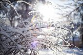Branches Covered With Heavy Snow On Blur Background And Sunflare poster
