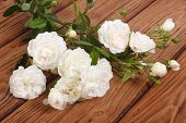 picture of climbing roses  - flowers white climbing rose on a wooden table - JPG