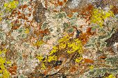 Nature Colors Background. Rock Surface With Lichen And Moss Texture