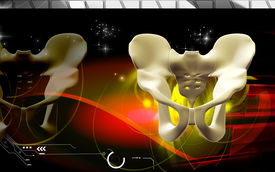 pic of girdles  - Digital illustration  of pelvic girdle in    colour background - JPG