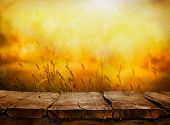 picture of fall-wheat  - Summer or autumn background - JPG