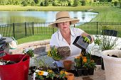 foto of planters  - Senior lady gardener repotting houseplants removing them from the containers they have outgrown and combining them into large ornamental planters on her outdoor patio - JPG