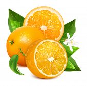 stock photo of orange blossom  - Fresh ripe oranges with leaves and blossom - JPG