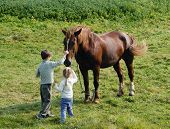 Kids and horses pic.