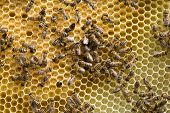 foto of swarm  - Macro shot of bees swarming on a honeycomb - JPG