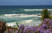 Laguna Beach Wave And Flowers