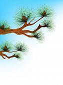 pic of pine-needle  - illustration pine - JPG