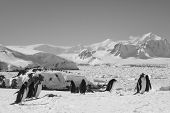 stock photo of snowy hill  - large group of penguins having fun on the snowy hills of  Antarctica - JPG