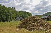 stock photo of corn stalk  - A pile of corn stalks from a field are piled up in front of several weathered old farm buildings.