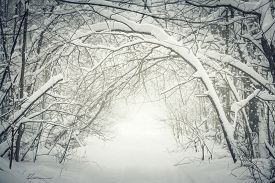 picture of heavy  - Snowy path through winter forest with overhanging heavy branches bending under snow and forming a tunnel - JPG