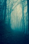 stock photo of mystical  - Photo of Forest in the mist - JPG