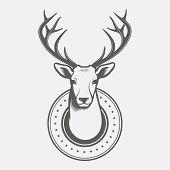 pic of deer head  - Deer head - JPG