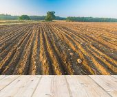stock photo of plow  - Landscape with plowed field at sunrise with wooden floor on foreground - JPG