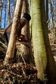 foto of man chainsaw  - Senior caucasian man woodcutter cutting down trees with chainsaw - JPG