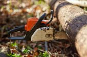 pic of chainsaw  - Chainsaw plunged into a tree with selective focus - JPG