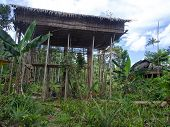 pic of tree house  - The jungle Indonesia  - JPG