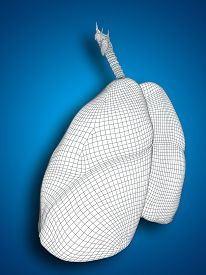 pic of respiratory  - Concept or conceptual anatomical human man 3D wireframe mesh respiratory system  with lungs on blue background - JPG