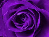 Постер, плакат: Улучшеный purple розовый фон