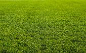 Постер, плакат: Nice зеленая трава текстуры формируют футбольное поле