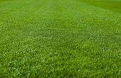Постер, плакат: Зеленая трава с малой глубиной резкости в футбольное поле