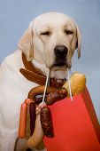 stock photo of bag-of-dog-food  - Dog with an appetizing set of sausages - JPG