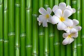 picture of bamboo forest  - Bamboo background - JPG