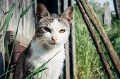 Gray cat portrait in garden poster