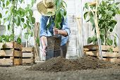 Woman Work In The Vegetable Garden With Hands Repot And Planting A Young Plant On Soil, Take Care Fo poster