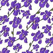 Vector Seamless Pattern Of Diagonal Iris Flowers. Endless Botany Texture For Fabrics, Textile Print, poster