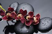 Branch red orchid with zen stones on wet black background