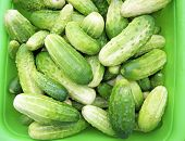 image of groundwater  - Cucumbers groundwater collected in the green cups - JPG