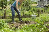 Low section of woman digging on an allotment